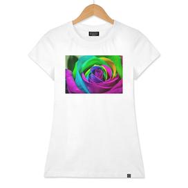 Multi-Coloured Rose