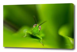 Smiling Grasshopper