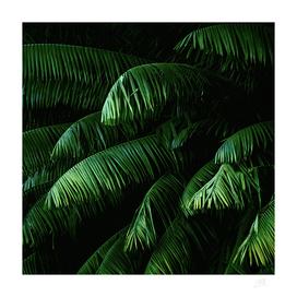 Green lush palms