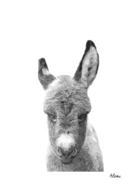 Black and White Baby Donkey