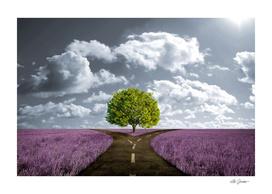 Lavender crossroad