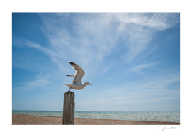 Seagull in Hastings