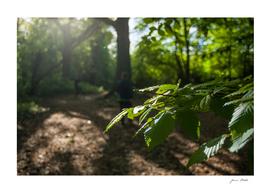 Bexley Woods