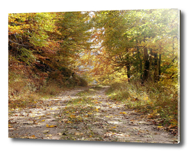 Forest stone path