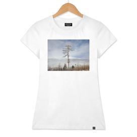 Larch tree - winter nature