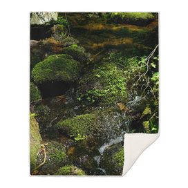 Forest Water