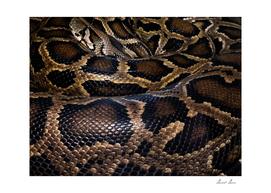 Python - leather - background