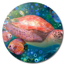 Sea Turtle by a Reef