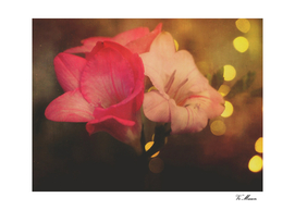 bronze bokeh flowers