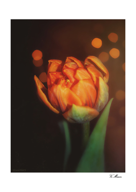 golden orange bokeh tulip