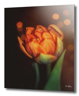 golden orange bokeh tulip