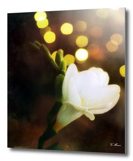 vintage spring flower