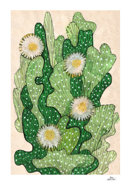 Blooming cacti, beige, white & green