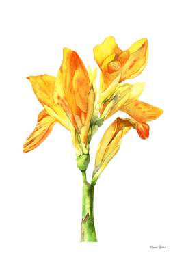 Golden Canna Watercolor Painting