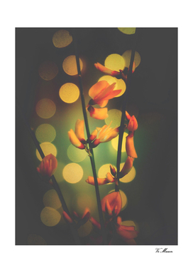 little orange flowers with bokeh light spots