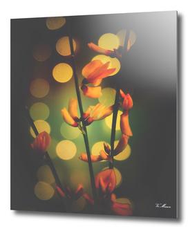 little orange flowers with bokeh light spots