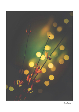 little orangle flowers with bokeh spots