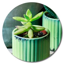 Succulent plant in green pot.