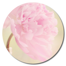 AFE Pink Peony