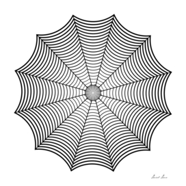 Black spider web