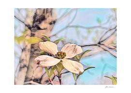 White Dogwood Pastel