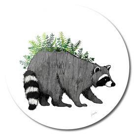 plant racoon