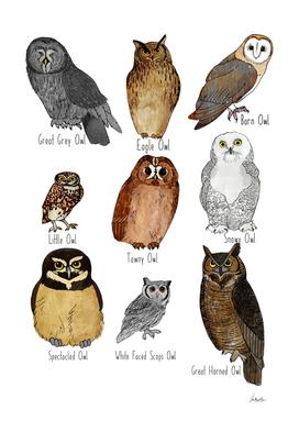 Types Of Owl