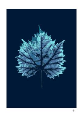 Indigo vine leaf