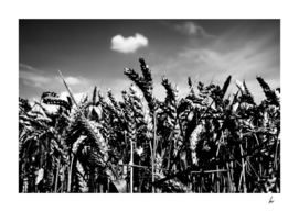 Wheat Field Black And White