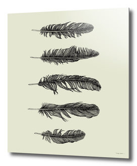 Five Lucky Feathers