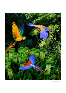 Jungle birds