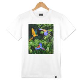 Jungle birds