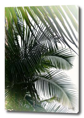 Tropical ii