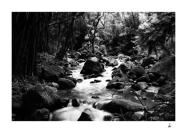 Amazon Jungle River Rocks