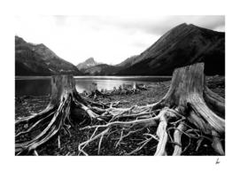 Dead Trees Canada Lake