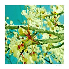 spring blossoms vintage teal