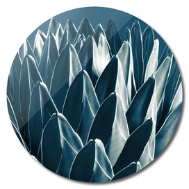 Agave Chic #5