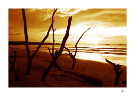 Thailand Driftwood Beach