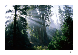 Ancient Forest Sun Rays