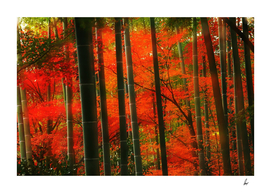 Red Bamboo Trees In China