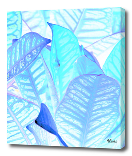 Blue Croton Tropical Leaves