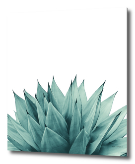 Agave Vibes #8