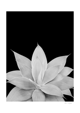 Gray Agave on Black #1