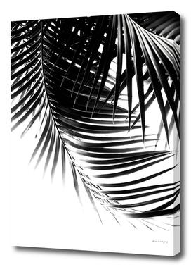 Palm Leaves Black & White Vibes #1