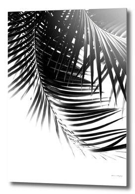 Palm Leaves Black & White Vibes #1