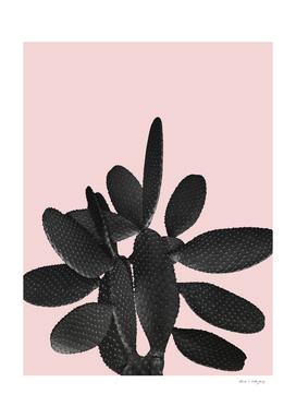 Black Blush Cactus #2