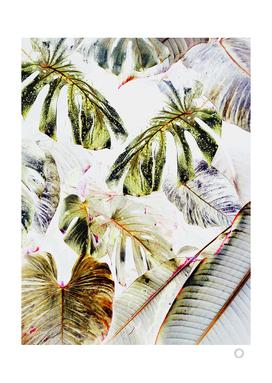 Vintage Tropica