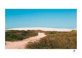 Floripa's Beach Dunes