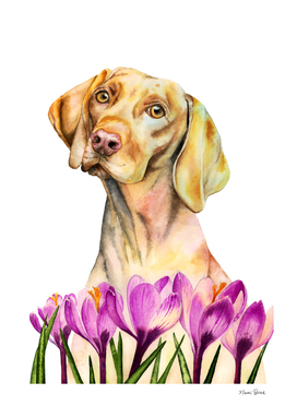 Angelic | Vizsla Dog and Crocus Watercolor Painting