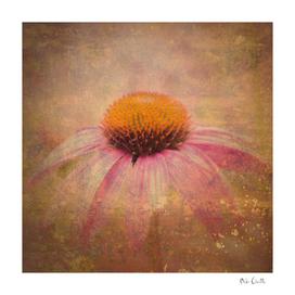 Cone Flower Dream